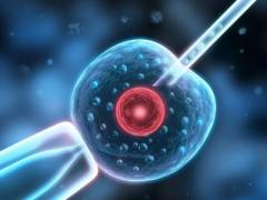 什么是囊胚?需要培育多久?试管婴儿为什么要
